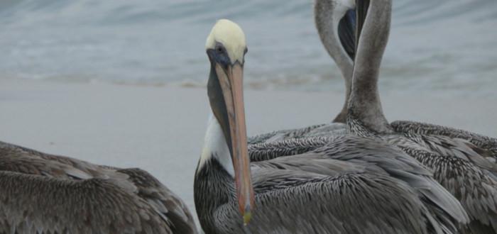 Qué ver en Acapulco pájaros