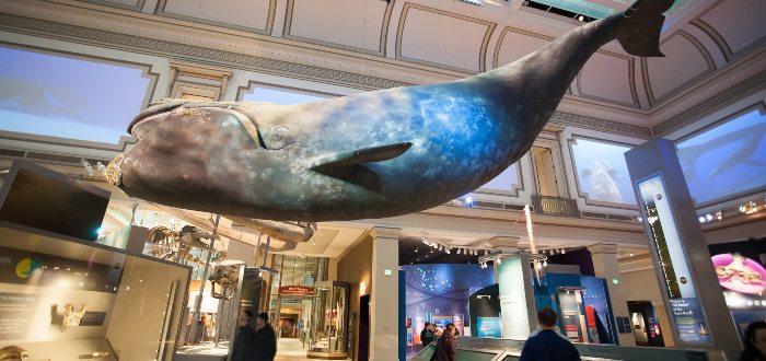Qué ver en Washington, Museo Nacional de Historia Natural del Instituto
