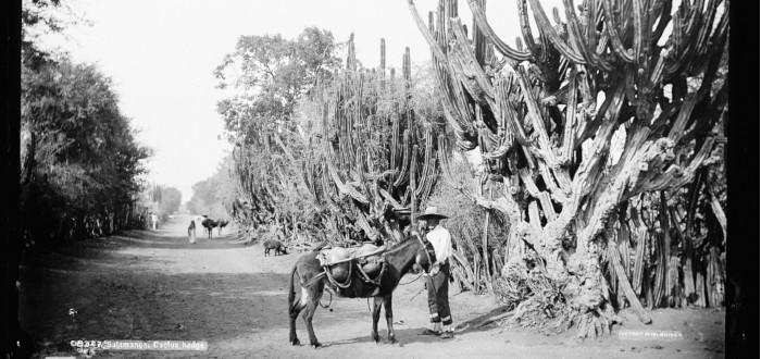 Qué ver en Salamanca cactus