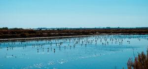 Qué ver en Andalucía | Parque Nacional de Doñana