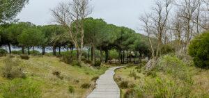 Qué ver en Andalucía | Parque de María Luisa (Sevilla)