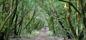 Qué ver en Canarias | Parque Nacional de Garajonay