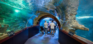 Qué ver en San Sebastián | Aquarium