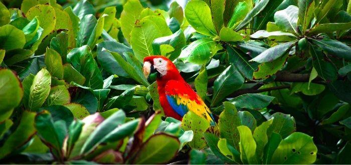 Parque nacional Corcovado   Qué ver en Costa Rica