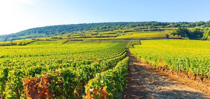 Qué ver en Zamora | La Tierra del Vino de Zamora