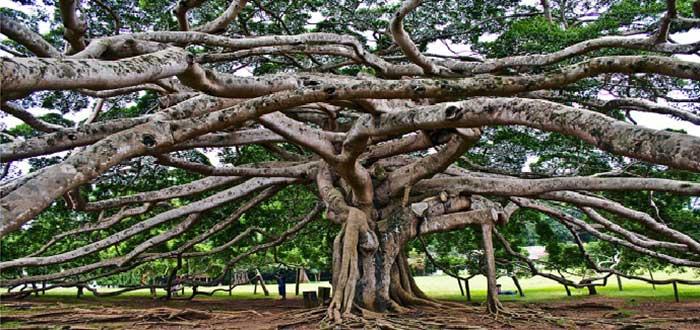 Qué ver en Sri Lanka | Real Jardín Botánico de Peradeniya