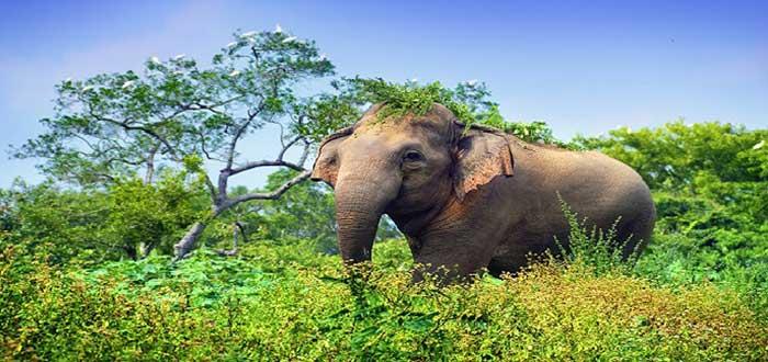 Qué ver en Sri Lanka | Parque Nacional Udawalawe
