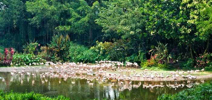 Parque de Aves de Jurong
