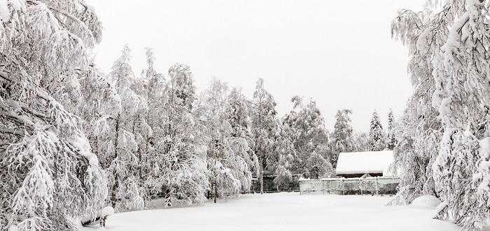 Qué ver en Finlandia   Ranua Zoo