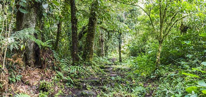 Qué ver en Panamá | Parque natural metropolitano