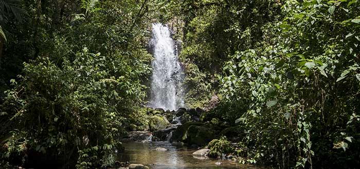 Qué ver en Panamá | Parque nacional Soberanía