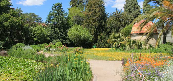 Qué ver en Montpellier | Jardin des Plantes de Montpellier