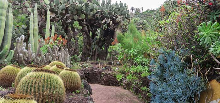 Qué ver en Gran Canaria | Jardín Botánico Viera y Clavijo
