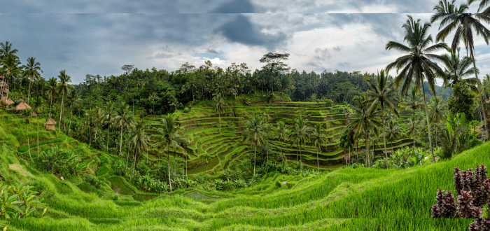 Qué ver en Indonesia | Tegallalang Rice Terrace