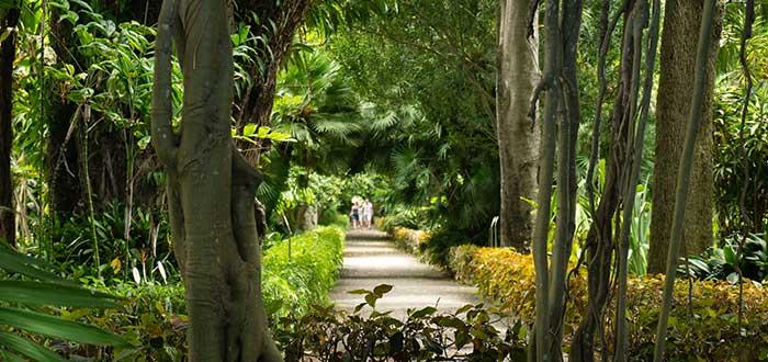 Qué ver en Puerto de la Cruz | Jardín de Aclimatación de La Orotava