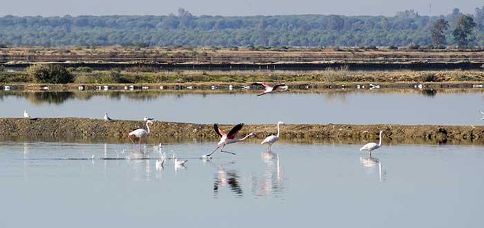 Qué ver en Huelva   Marismas del Odiel