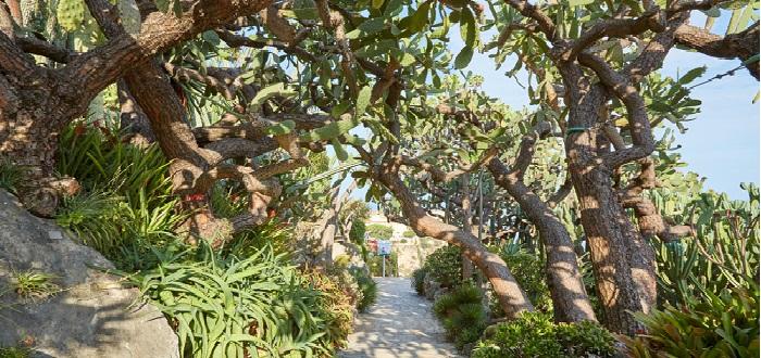 Qué ver en Mónaco | Jardín Exótico de Mónaco