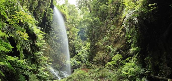 Qué ver en La Palma | Cascada de Los Tilos