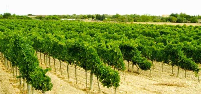 Bodega Vins Miquel Gelabert