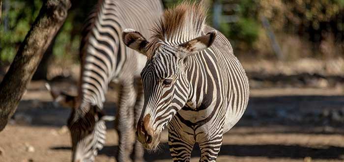 Qué ver en Montpellier | Parque Zoológico de Montpellier