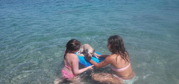 Qué ver en Fuengirola | Playa para perros