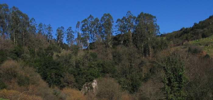 Área Natural de Especial Interés de la Viesca