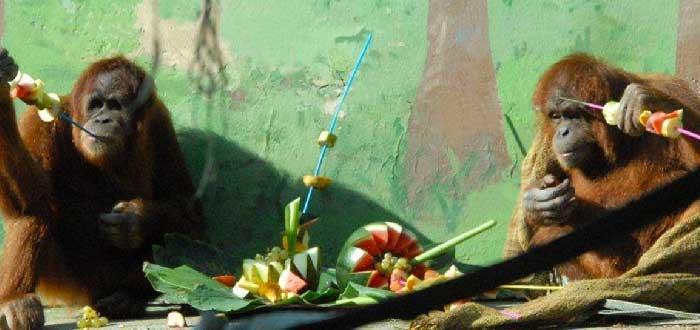 Zoo y Parque Cuaternario de Santillana del Mar