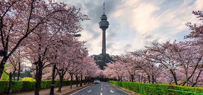 Ciudades de Corea del Sur | Daegu