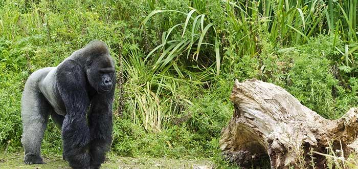 Qué ver en Bristol | Zoo de Bristol