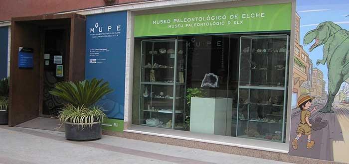 Qué ver en Elche | Museo Paleontológico de Elche Fundación Cidaris