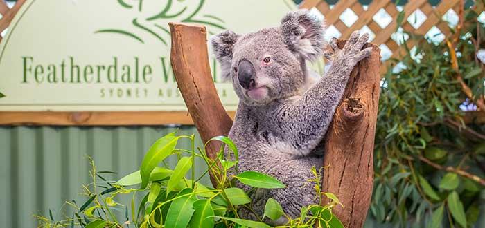 Qué ver en Sidney | Featherdale Wildlife Park