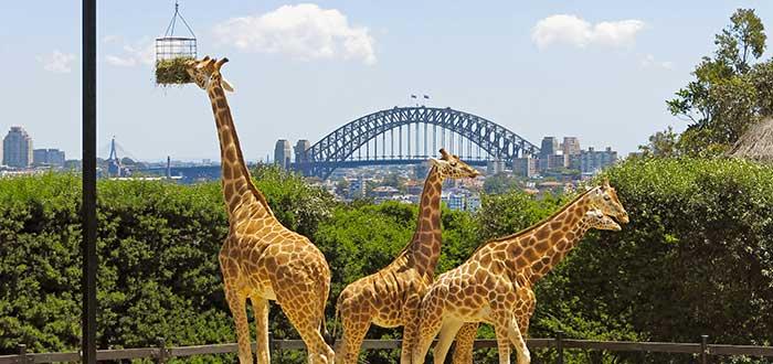 Qué ver en Sidney | Zoológico Taronga