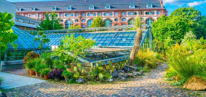 Qué ver en Basilea Jardín botánico de la Universidad de Basilea