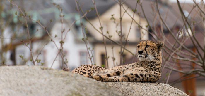Qué ver en Basilea Zoológico de Basilea