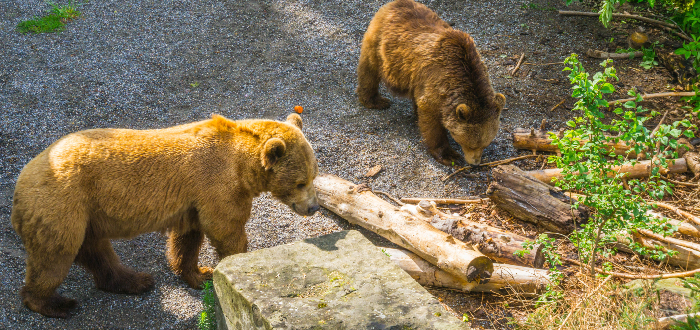 Qué ver en Berna | Bear Pit
