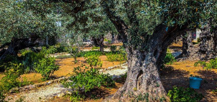 Qué ver en Jerusalén, Getsemaní