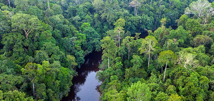 Qué ver en Malasia   Parque Nacional Taman Negara