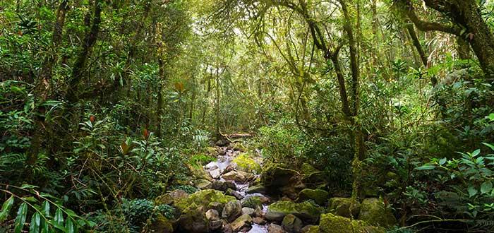 Qué ver en Malasia   Parque Nacional de Kinabalu
