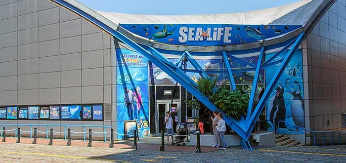 Que ver en Birmingham | National SEA LIFE Centre Birmingham