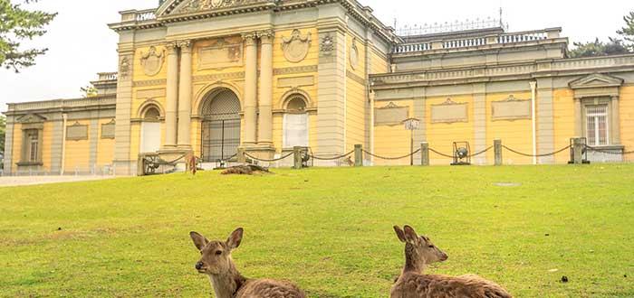 Qué ver en Nara | Museo Nacional de Nara
