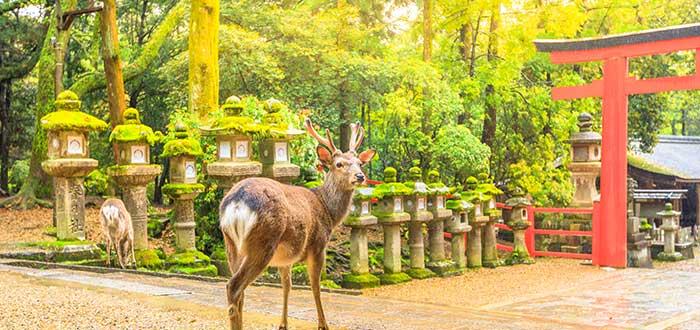 Qué ver en Nara | Parque de Nara