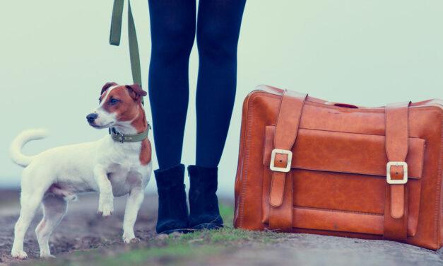 De vacaciones a Cartagena de Indias con nuestra mascota
