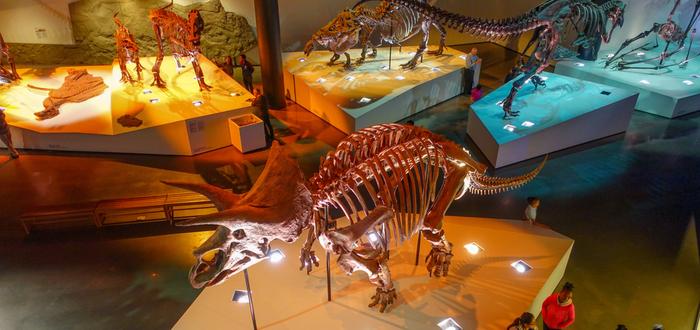 Qué ver en Houston. Museo de Ciencias Naturales de Houston