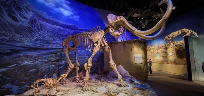 Qué ver en Ottawa. Museo Canadiense de la Naturaleza