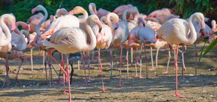 Qué ver en Hannover, Zoo de Hannover