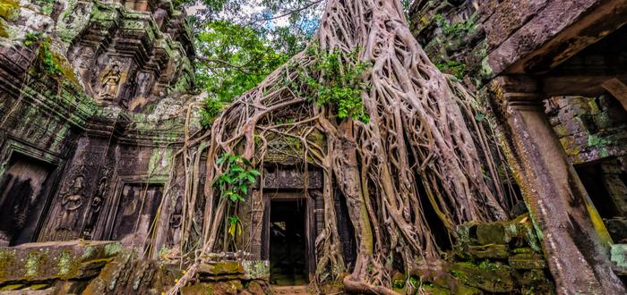 Qué ver en Siem Reap. Ta Prohm