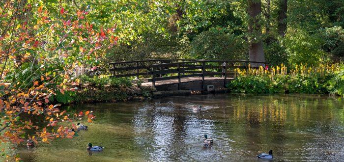 Qué ver en Windsor, Savill Garden