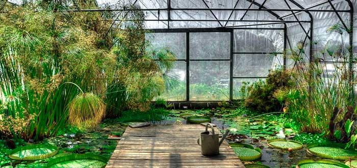 Que ver en Lieja | Jardin Botanico de la Universidad de Lieja