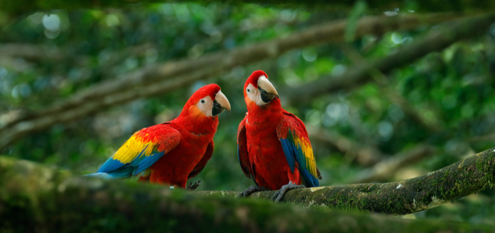 Qué ver en Honduras. Parque de Aves