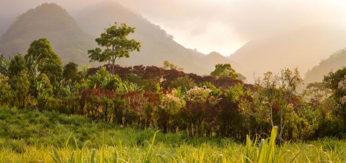 Qué ver en Honduras. Parque nacional Montaña Santa Bárbara